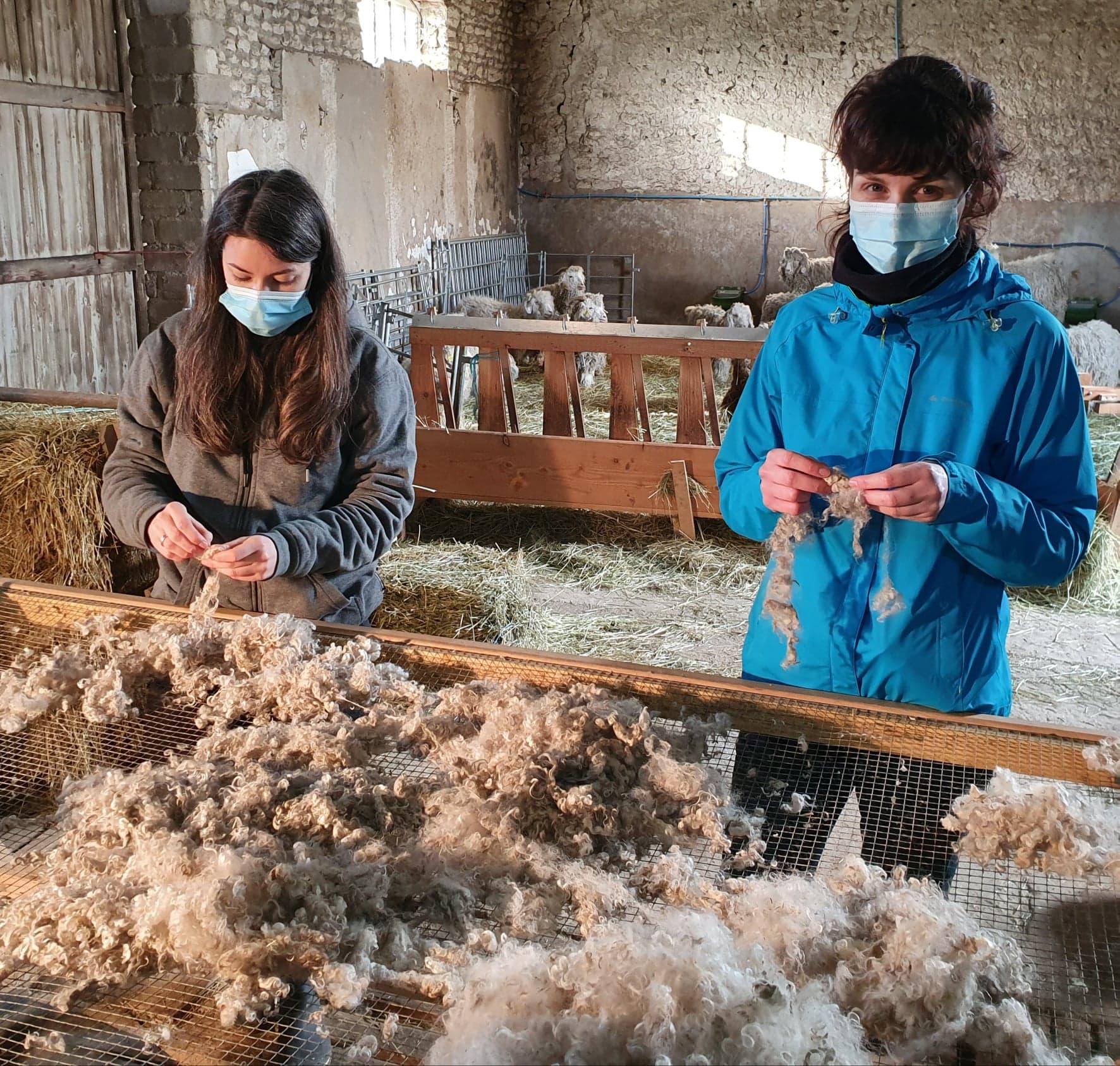 Chèvres angora laine mohair local producteur produits locaux ferme des P'tits bergers chaussy atraps loiret Essonne Angerville